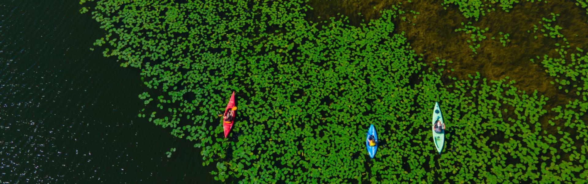 Porcupine Summer Photos Drone-47